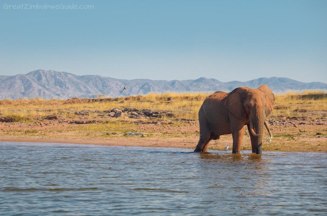 Spurwing Zimbabwe Kariba Game Drive