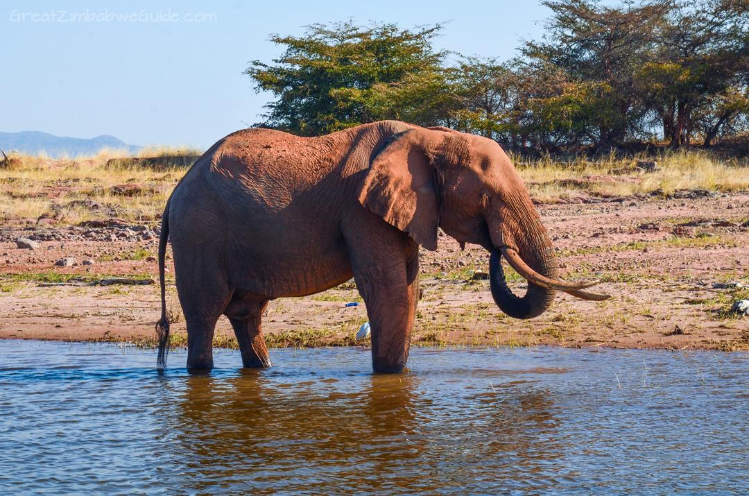 Laka Kariba Zimbabwe Elephant Game Viewing