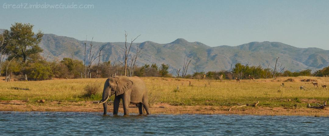 Spurwing Island Zimbabwe Kariba Game Drive