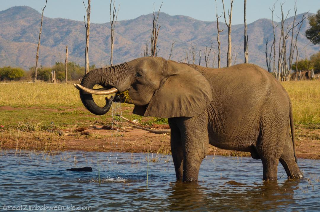 Lake Kariba Zimbabwe Elephant