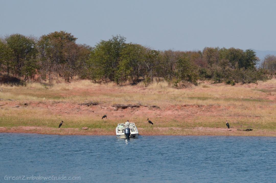 Laka Kariba Zimbabwe Hippo Bird Viewing