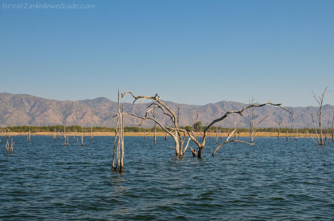 Lake Kariba Zimbabwe Drowned Forest
