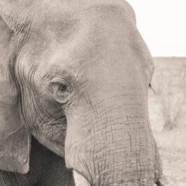 Great Zimbabwe Guide Wildlife Photography Kariba 13