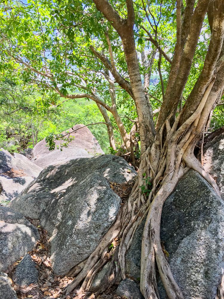 Zimbabwe Mavhuradona Wilderness Area Inspiration-1-20