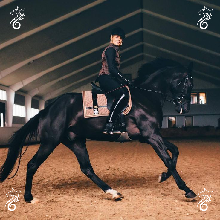 Horse-riding-trot