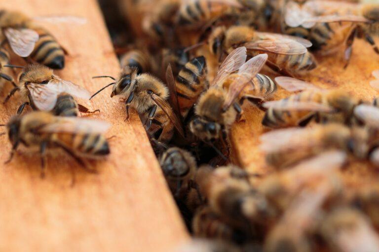 bees, beehive, honey
