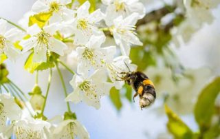 Save the bees in your garden
