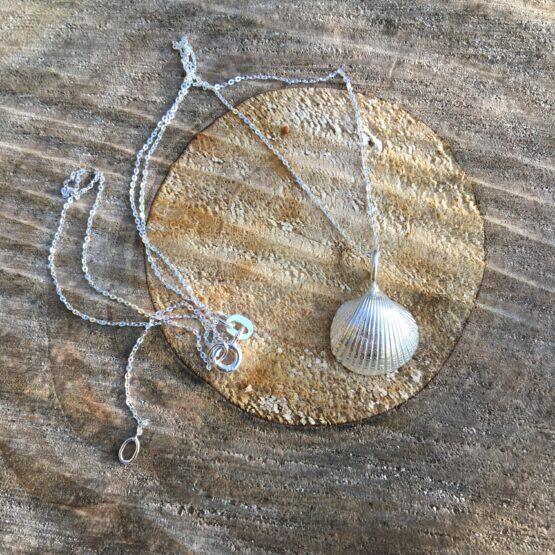 Chilli Designs cockle shell 1