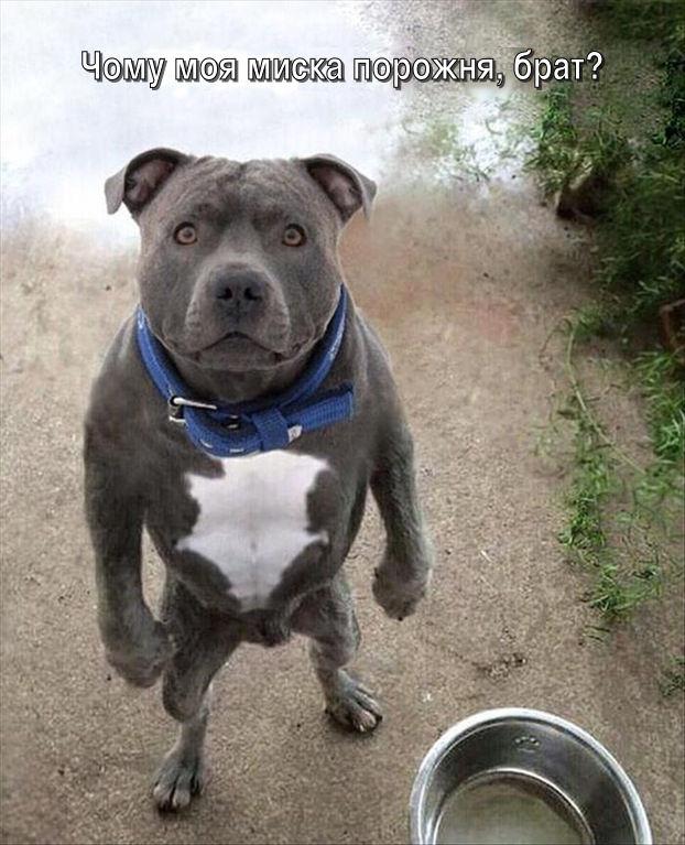 Смішне фото Собака хоче їсти. Пес: - Чому моя миска порожня, брат?