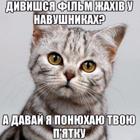 Думки кота