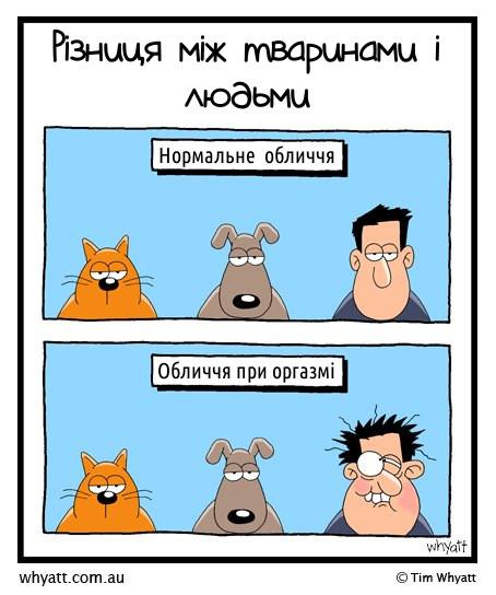 Різниця між тваринами і людьми