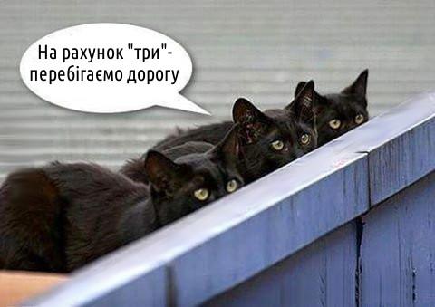 Чорні коти
