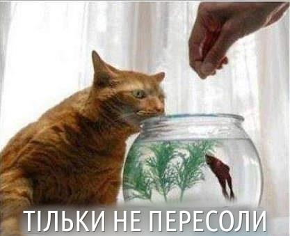 Кіт і акваріум