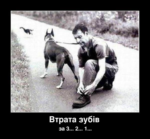 Демотиватор Собака на повідку. Хлопець тримає зубами собаку на повідку. І тут собака побачив кота. Втрата зубів через 3, 2, 1