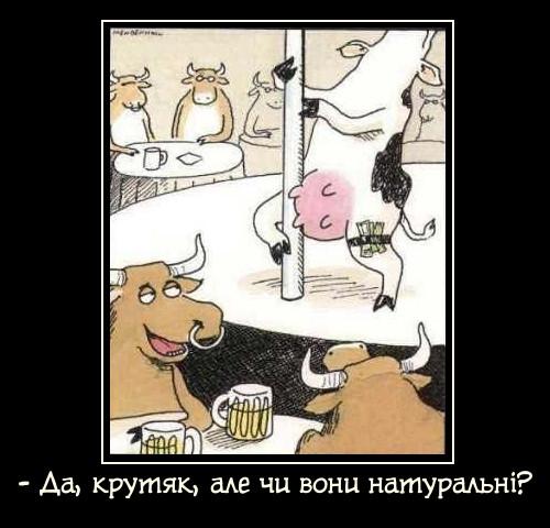 Бики і корови