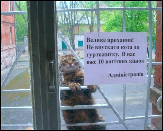 Кіт Казанова