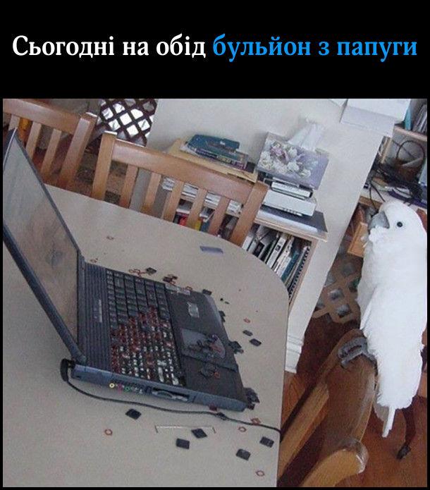 Папуга какаду повиколупував клавіші з ноутбука. Сьогодні на обід бульйон з папуги