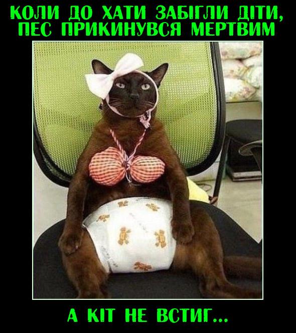 Домашні тварини. Коли до хати забігли діти, пес прикинувся мертвим. А кіт не встиг... Кота одягнули в підгузок, купальник і нацепили бантик