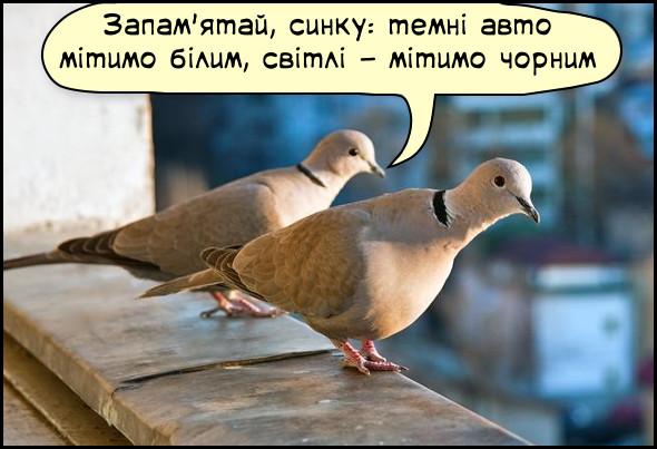 Смішна картинка про голубів. Сидять двоє голубів. Один каже: - Запам'ятай, синку: темні авто мітимо білим, світлі - мітимо чорним
