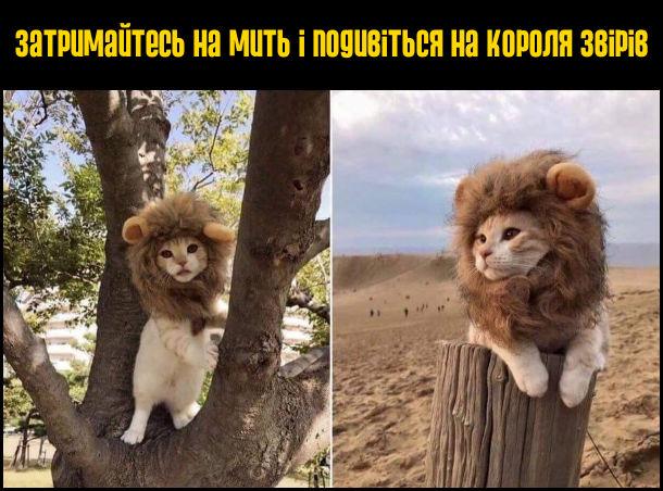 Затримайтесь на мить і подивіться на короля звірів. Кіт з гривою