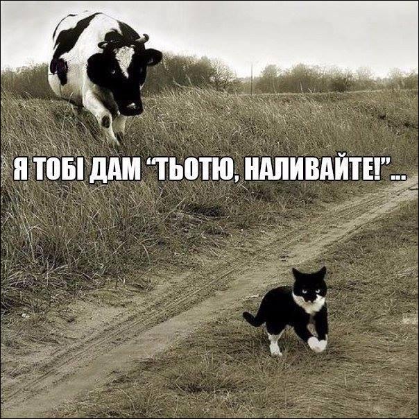 Корова й кошеня