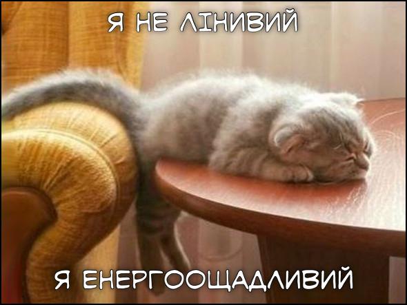 Лінивий кіт