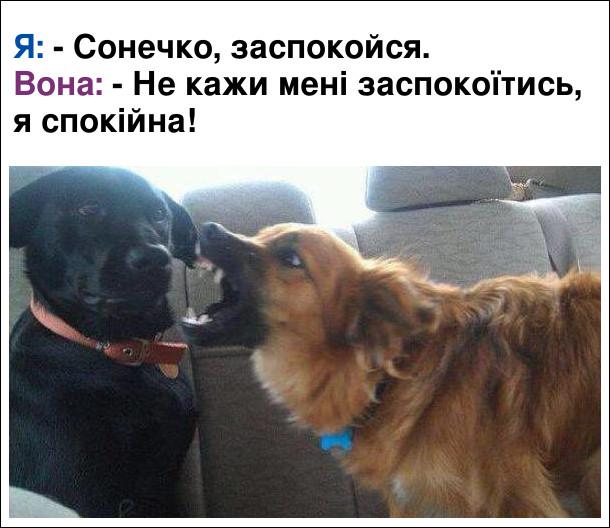 Мем з собаками. Про сімейні стосунки