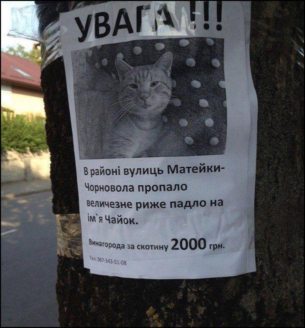 На дереві висить об'ява: Увага! В районі вулиць Матейки-Чорновола пропало риже падло на ім'я Чайок