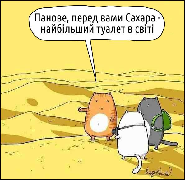 Коти...