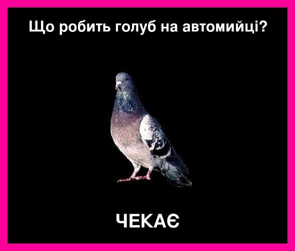 Що робить голуб на автомийці? Чекає
