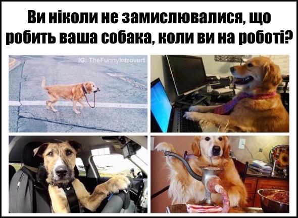 Що робить ваша собака, коли ви на роботі