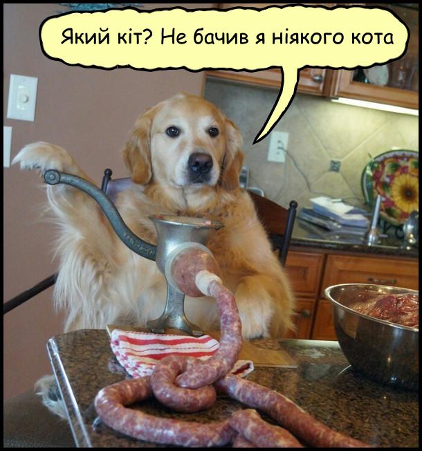 Песик на кухні