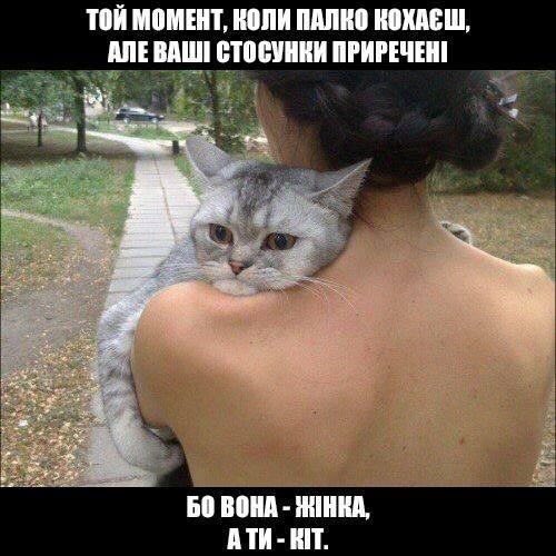 Прикол Закоханий кіт. Той момент, коли палко кохаєш, але ваші стосунки приречені, бо вона - жінка, а ти - кіт
