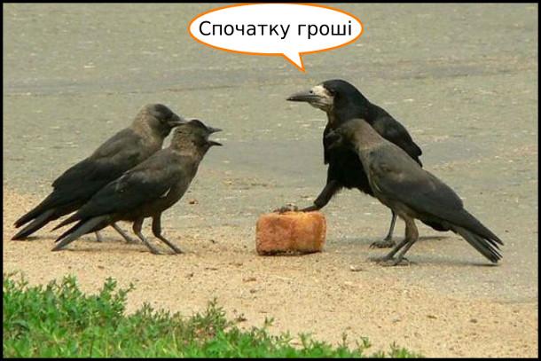 Жарт про круків. Чотири круки. Один крук тримає лапу на шматку хліба і каже: - Спочатку гроші. (ніби продає товар)
