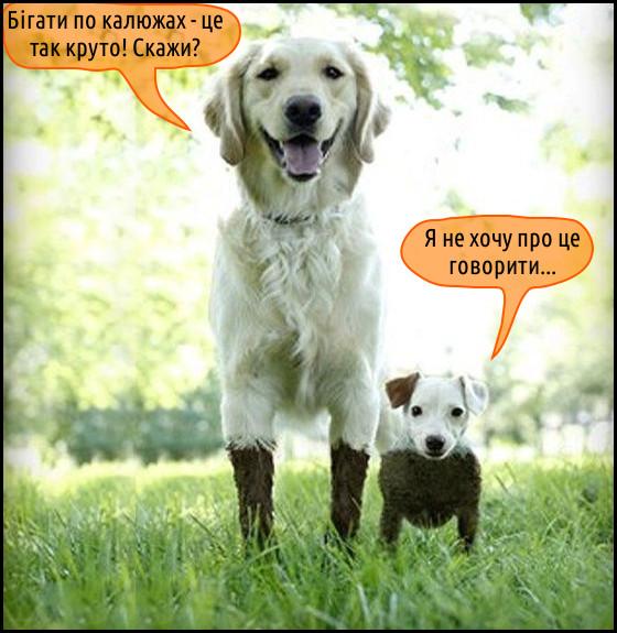 Смішне фото Собаки бігали по калюжах. Два пси - довгий і куций. Обоє в багнюці. Довгий (в багні лише лапи): - Бігати по калюжах - це так круто! Скажи? Куций (весь у багні): - Я не хочу про це говорити…