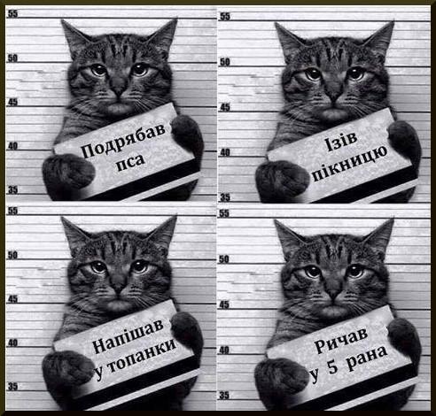Закарпатський кіт