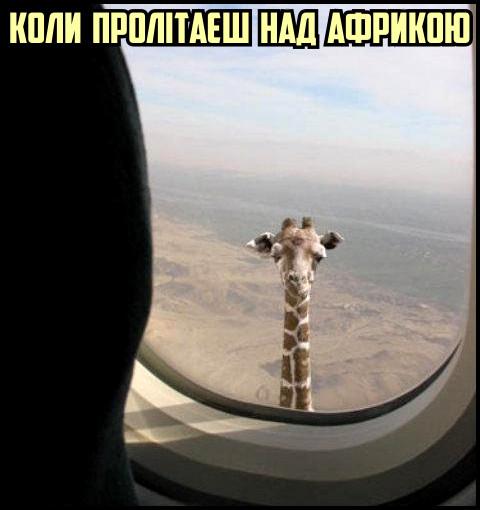 Смішне фото. Коли пролітаєш над Африкою