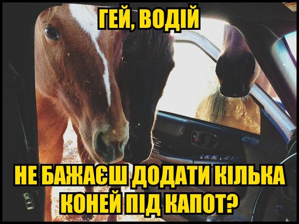 Коні зазирають в кабіну: - Гей, водій, не бажаєш додати кілька коней під капот?