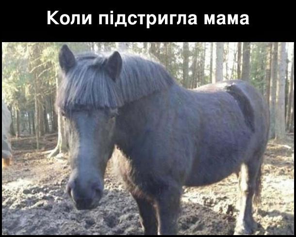 Коли підстри гла мама. На фото: кінь з кумедно підстриженою гривою