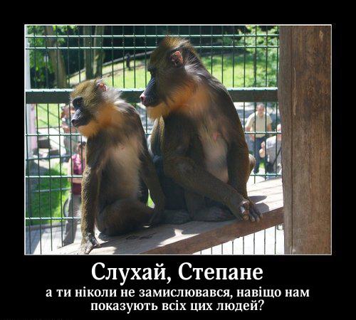 Прикол: Мавпи в зоопарку. Сидять дві мавпи в клітці зоопарку. - Слухай, Степане, а ти ніколи не замислювався, навіщо нам показують всіх цих людей?
