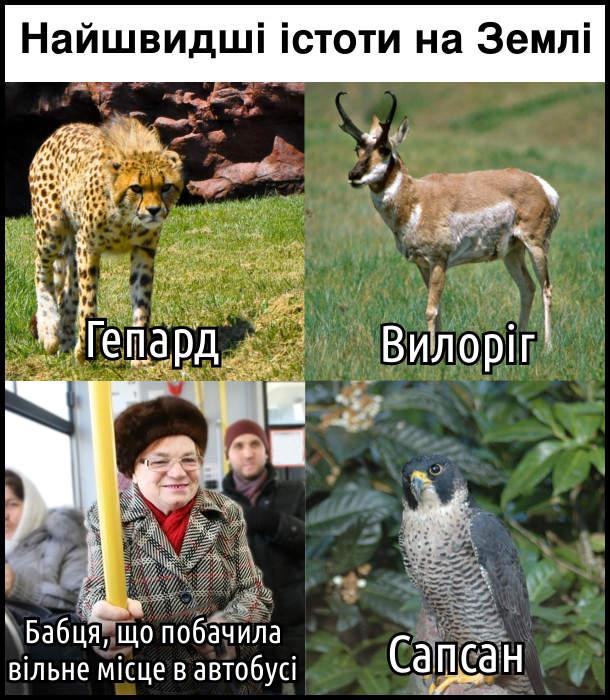 Найшвидші істоти на землі: гепард; вилоріг; бабця, що побачила вільне місце в автобусі; сапсан