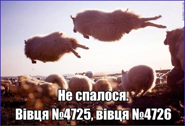 Не спалося. Вівця №4725, вівця №4726