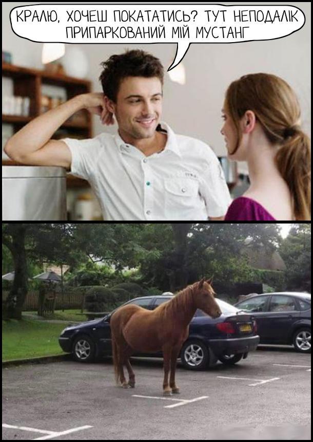Кралю, хочеш покататись? Тут неподалік припаркований мій Мустанг. На парковці стоїть кінь