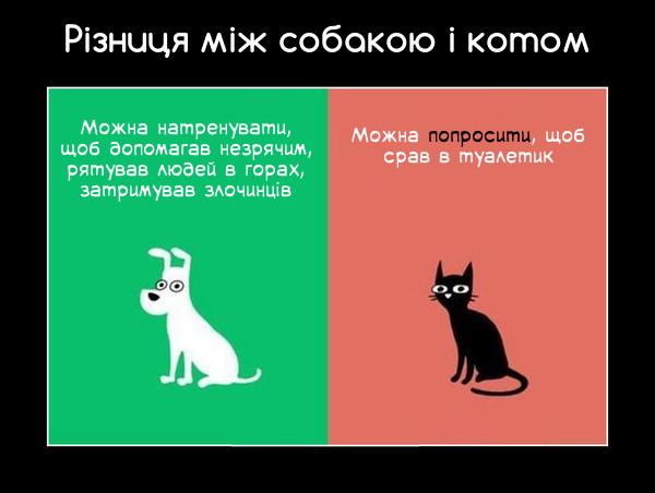 Різниця між собакою і котом. Собака: Можна натренувати, щоб допомагав незрячим, рятував людей в горах, затримував злочинців. Кіт: Можна попросити, щоб срав в туалетик