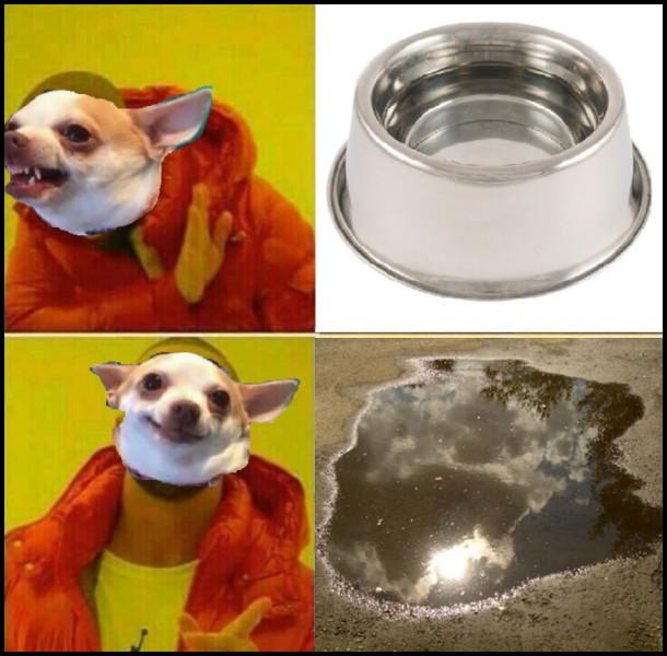 Мем про то, що собака не любить пити воду з миски. А з калюжі - саме то