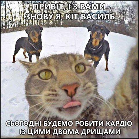 Привіт, і з вами знову я, кіт Василь. Сьогодні будемо робити кардіо із цими двома дрищами