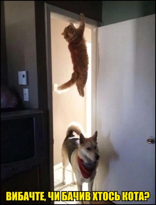 Кіт висить на дверях. Собака забігає: - Вибачте, чи бачив хтось кота?