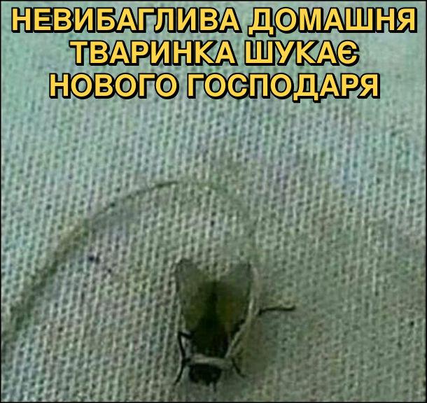 Невибаглива домашня тваринка шукає нового господаря. На фото: муха на ниточці