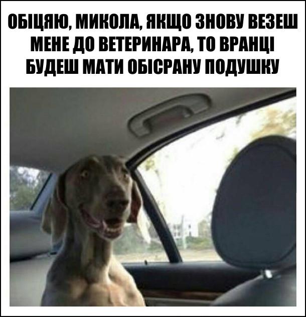 Пес: - Обіцяю, Микола, якщо знову везеш мене до ветеринара, то вранці будеш мати обісрану подушку