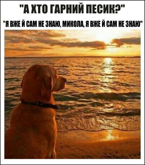 Мем Меланхолійний пес. А хто гарний песик? - Я вже й сам не знаю, Микола, я вже й сам не знаю. На фото: пес на березі моря меланхолійно дивиться на захід сонця